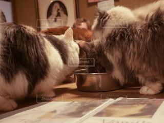 猫,動物,食事,ネコ