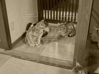 猫,動物,ネコ,出待ち