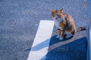 猫,動物,屋外,道,コンクリート,地面,ネコ,座り猫