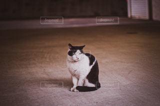 猫,動物,駐車場,座る,ネコ