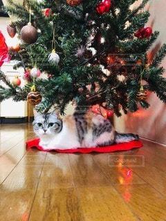 猫,動物,赤,ペット,クリスマス,ネコ,クリスマス ツリー