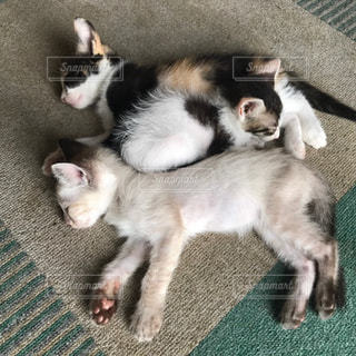 猫,動物,かわいい,ペット,子猫,たくさん,ネコ