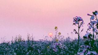 春の夕暮れの写真・画像素材[2989565]