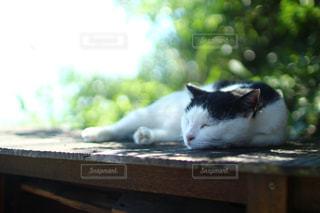 猫,海,動物,椅子,ペット,寝る,人物,木陰,香川,離島,単焦点,ネコ,男木島