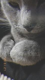猫,動物,ペット,人物,愛猫,ネコ,美形