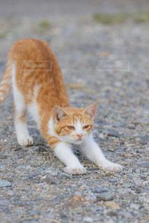 猫,動物,屋外,かわいい,野良猫,眠たい,寝起き,ネコ,猫の日,にゃんにゃんにゃんの日