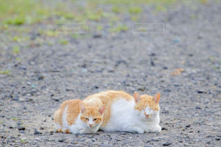 猫,動物,屋外,親子,ペット,野良猫,地面,ネコ,猫の日,にゃんにゃんにゃんの日