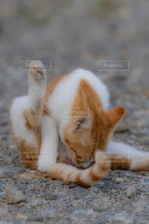 猫,動物,屋外,かわいい,野良猫,地面,セクシー,ネコ,猫の日,にゃんにゃんにゃんの日