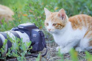 猫,風景,カメラ,動物,屋外,かわいい,ネコ,猫の日,にゃんにゃんにゃんの日