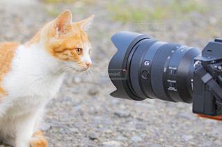 モデル,猫,カメラ,動物,屋外,かわいい,撮影,野良猫,地面,ポーズ,カメラ目線,SONY,ネコ,猫の日