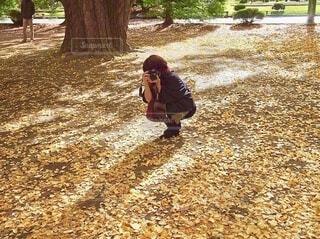 イチョウの落ち葉の上でカメラを構える女性の写真・画像素材[3712143]