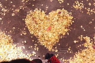 ハートにまとめた黄色の落ち葉の写真・画像素材[3712146]