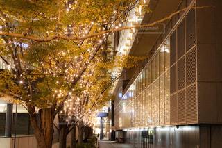 冬,夜景,オレンジ,ガラス,イルミネーション,ライトアップ,クリスマス,丸,並木道,装飾,明るい,デート,ショッピング,グランフロント,街路樹,グランフロント大阪