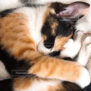 猫,動物,ペット,寝顔,寝る,人物,ネコ,2月22日,ニャンコの日