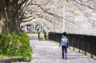 花,春,桜,後ろ姿,トンネル,小学生,ソメイヨシノ