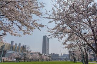 公園,花,春,桜,高層ビル,ホテル,ソメイヨシノ