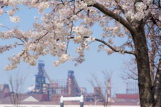 花,春,桜,工場,ソメイヨシノ