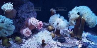 海の中の写真・画像素材[3042020]