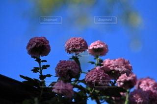 花,春,景色,草木,ブルーム,フローラ