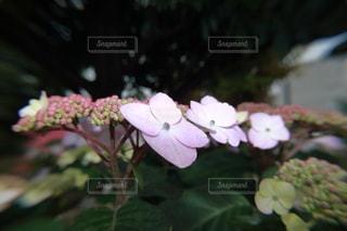 花のクローズアップの写真・画像素材[3252435]