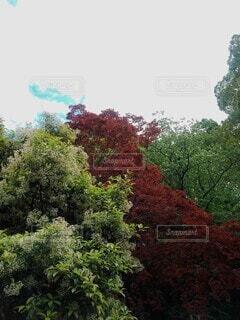 紅葉シーズンの写真・画像素材[3726182]