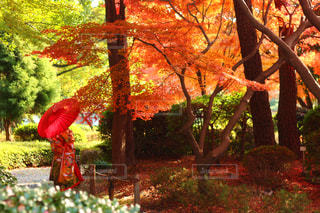 木の隣に赤い消火栓の写真・画像素材[754851]