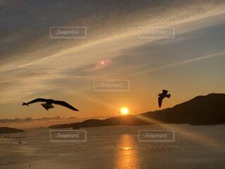 朝日の出とウミネコの写真・画像素材[4031731]