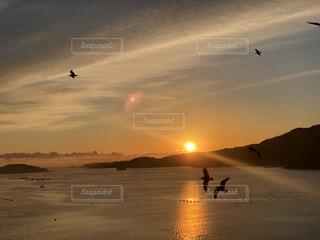 朝日とウミネコの写真・画像素材[4031735]