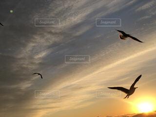 朝日とウミネコの写真・画像素材[4031736]