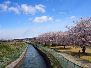 自然,空,花,春,桜,屋外,水路,草,春の訪れ