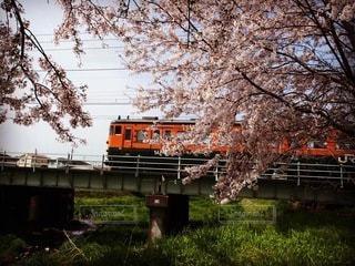 花,桜,鉄道,春の訪れ,車両,桜満開