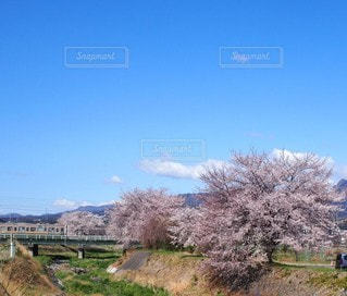 自然,風景,空,花,春,桜,景色,新緑,春の訪れ