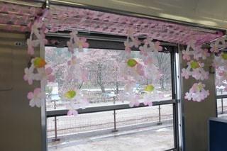 桜,窓,花見,車窓,客車