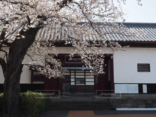 春,桜,景色,桜の花,さくら