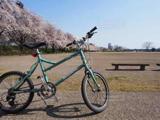 空,春,桜,自転車,屋外,サイクリング,気持ちいい,桜ロード,ポカポカ