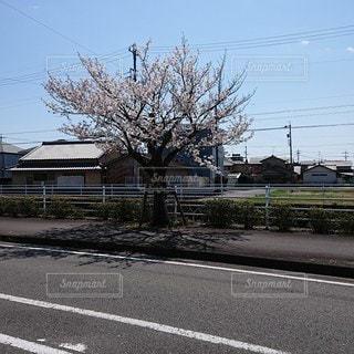 道路,樹木,道,通り,草木