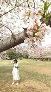 女性,花,春,カメラ,桜,木,花見,お花見,写真,草木