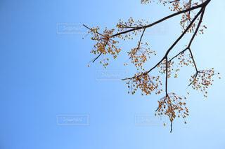 空 樹木の写真・画像素材[2989319]