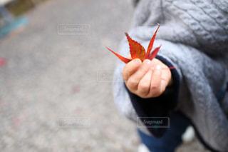葉っぱのクローズアップの写真・画像素材[2989318]
