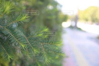 植物 屋外の写真・画像素材[2989325]