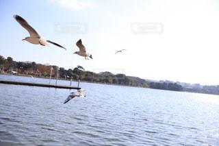 水面上を飛ぶ鳥の写真・画像素材[2989324]
