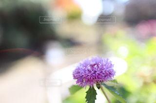 ピンクの花の写真・画像素材[2989326]