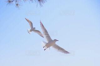 空を飛んでいる鳥の写真・画像素材[3025054]