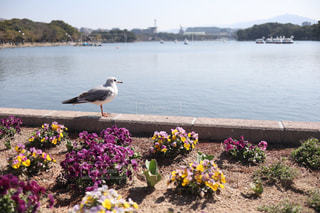 鳥の写真・画像素材[3025056]