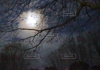 自然,空,夜,屋外,幻想的,樹木,月,月夜,月明かり,草木