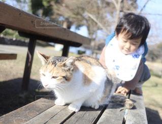 子ども,1人,猫,公園,動物,屋外,ベンチ,子供,樹木,地面,木目,日向ぼっこ