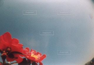 赤い花、空の写真・画像素材[2983618]