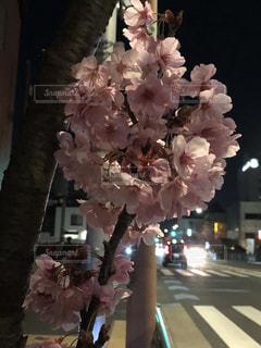 花,春,夜桜,ブロッサム,手鞠桜
