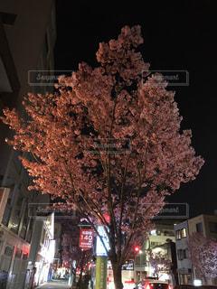 春,桜,屋外,幻想的,夜桜,歩道,ブロッサム