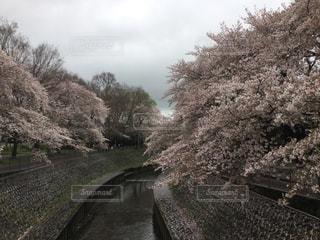 空,花,春,屋外,湖,水面,樹木,石,草木,桜の花,さくら,ブロッサム